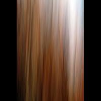 IMG_5771.JPG (mosofreund)