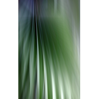 IMG_7205.JPG (mosofreund)