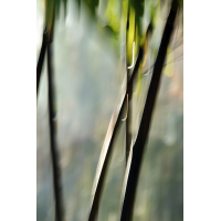 IMG_7213.jpg (mosofreund)