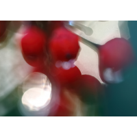 IMG_7230.JPG (mosofreund)