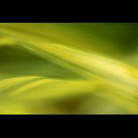 IMG_4535for2.jpg (mosofreund)