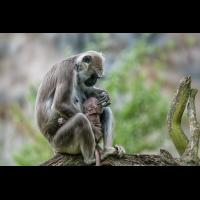 Muttertag... (1 von 1).jpg (Enrico)