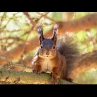 Sonniges Eichhörnchen (1 von 1).jpg (Enrico)