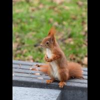 Baustellenhörnchen (1 von 5).jpg (Enrico)