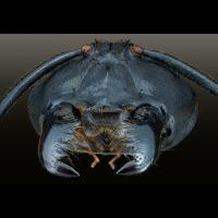 ant_mouth.jpg (Adalbert)