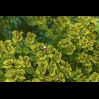 20210714_173001-2-1-1.jpg (plantsman)