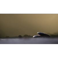20190918-191631-(HL).jpg (HärLe)