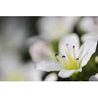 _MG_0371.jpg (Jes_Le)