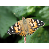 img_7028_139.jpg (Artengalerie)