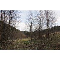 olefbach_narzissen1_861.jpg (Artengalerie)