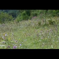 gruenland_magerrasen_165.jpg (Artengalerie)
