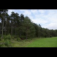 lichter_kiefernwald_104.jpg (Artengalerie)