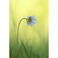 6a_filtered_156.jpg (Artengalerie)