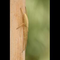 spinne8_590.jpg (Artengalerie)
