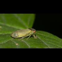 insekt_1200_208.jpg (Artengalerie)