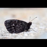 DSC81574.jpg (Artengalerie)