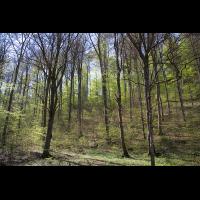 Buchenwald_.jpg (Artengalerie)