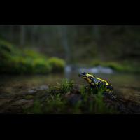 20150405-_DSC0120-klein.jpg (Artengalerie)