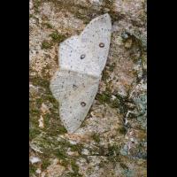 IV8A4873_800.jpg (Artengalerie)