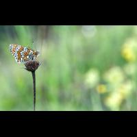 P1050323A.jpg (Gartenspitz)