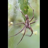 Spinne_bearbeitet-1.jpg (Peter56)