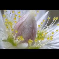 Blüteklein.jpg (Peter56)