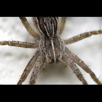 Spinne.jpg (Peter56)