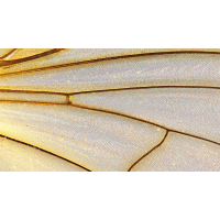 Flügel.jpg (Peter56)