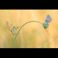IMG_5211-1 (1200px).jpg (mehr-licht)