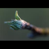 _D816872.jpg (Herzogpictures)