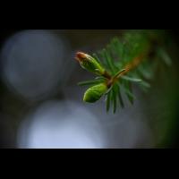 _D811772-Bearbeitet.jpg (Herzogpictures)