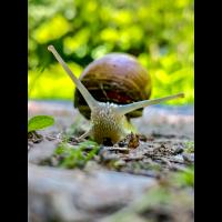 IMG_7144.jpg (Herzogpictures)