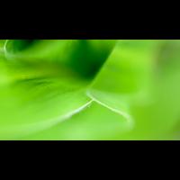 _D818613.jpg (Herzogpictures)