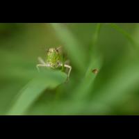 _D818576.jpg (Herzogpictures)