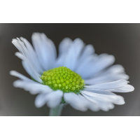 _D812263.jpg (Herzogpictures)