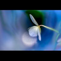 _D812561.jpg (Herzogpictures)