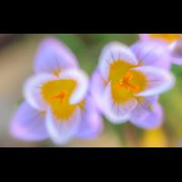 _D818409.jpg (Herzogpictures)