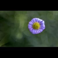 _D812842.jpg (Herzogpictures)