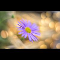 _D813116.jpg (Herzogpictures)