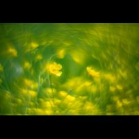 _D813523.jpg (Herzogpictures)