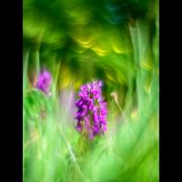 _D813757.jpg (Herzogpictures)