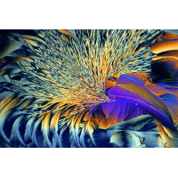 Mikrokristalle in polarisiertem.jpg (Sasscha)