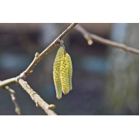 Frühling.jpg (Il-as)