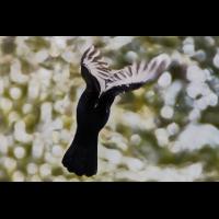 schwarzer Engel.jpg (Il-as)