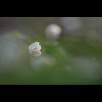 DSC_2619.JPG (mantabubu)